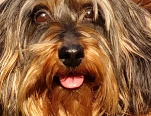 Mijn hond en lymfeklierkanker